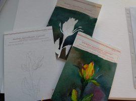 Aquarellieren beginnt mit der richten Papierauswahl (c) Frank Koebsch