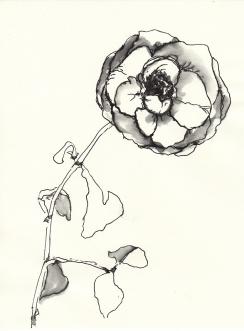 Rose 105 (c) Zeichnung von Martina Wald