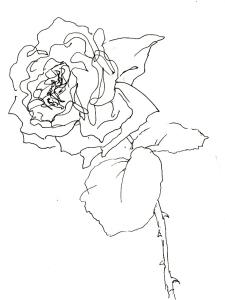 Rose 108 (c) Zeichnung von Martina Wald