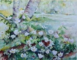 Frühling im Wald (c) Aquarell von Hanka Koebsch