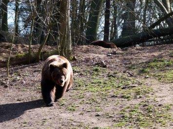Bären im Schweriner Zoo (c) Frank Koebsch (1)