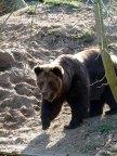 Bären im Schweriner Zoo (c) Frank Koebsch (2)