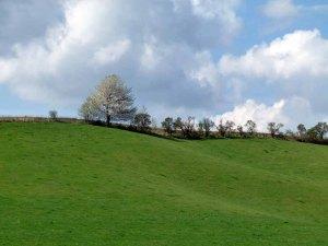 Frühling auf den Wiesen an der Recknitz (c) Frank Koebsch (1)