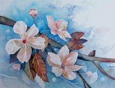 Zierkirschen als Frühlingsboten (c) Aquarell von Frank Koebsch