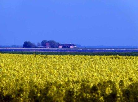 Blick über die Rapsfelder von Ummanz auf den Freienhof Rügen (c) FRank Koebsch