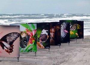 Butterflys im Sturm am Strand von Zingst als Teil des Fotofestivals horizonte (c) Frank Koebsch (1)