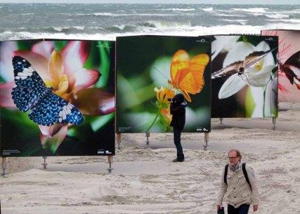 Butterflys im Sturm am Strand von Zingst als Teil des Fotofestivals horizonte (c) Frank Koebsch (4)