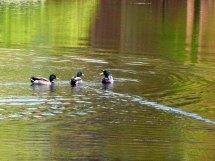 Motive für den Aquarellkurs im Park des DoberanerMünsters (c) Frank Koebsch