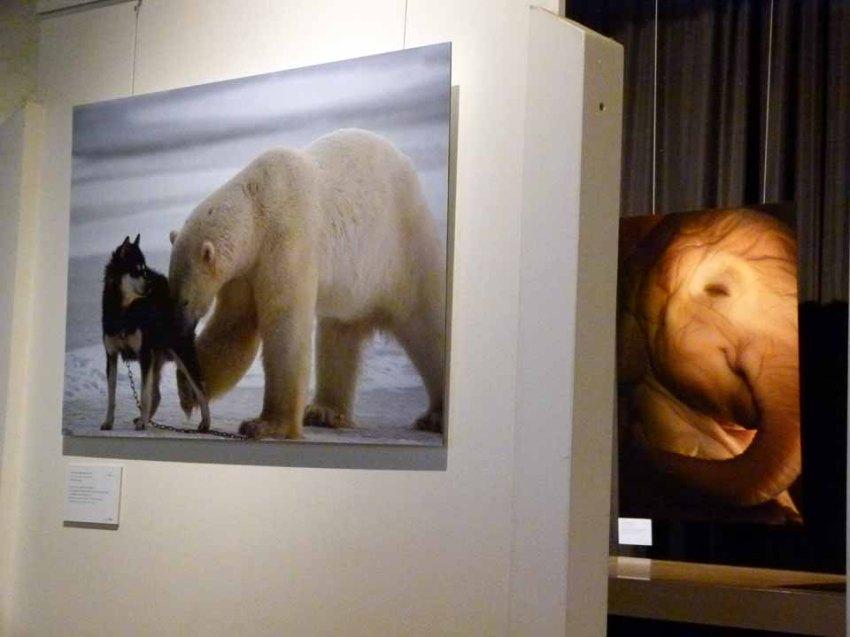 Schnappschüsse aus der Ausstellung Grandiose Naturdokumente im Rahmen des Fotofestivals Horizonte (c) Frank Koebsch (2)