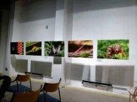 Schnappschüsse aus der Ausstellung Grandiose Naturdokumente im Rahmen des Fotofestivals Horizonte (c) Frank Koebsch (3)
