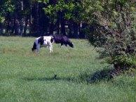Hase versteckt im Gras und fast unsichtbar im Schatten (c) Frank Koebsch (1)