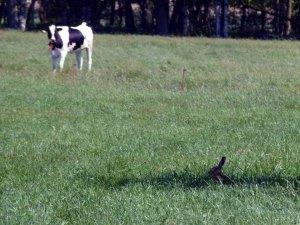Hase versteckt im Gras und fast unsichtbar im Schatten (c) Frank Koebsch (2)