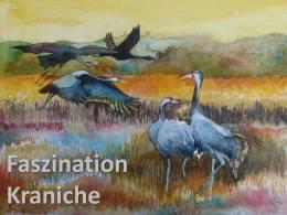 Faszination Kraniche – ein gemeinsames Projekt mit dem Kranichschutz Deutschland.