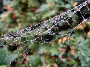 Altweibersommer - Tau im Spinnennetz (c) Frank Koebsch (1)