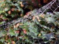 Altweibersommer - Tau im Spinnennetz (c) Frank Koebsch (2)