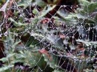 Altweibersommer - Tau im Spinnennetz (c) Frank Koebsch (3)