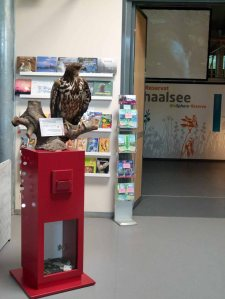 Ausstellung im Biosphärenreservat Schaalsee (c) Frank Koebsch (2)