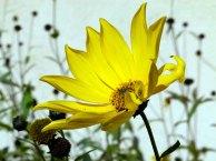 Blüten im Spätsommer (c) Frank Koebsch (2)