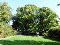 Garten des Ostsee Landhauses Zweedorf (c) Frank Koebsch (2)