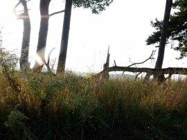 Herbststimmung im Müritz-Nationalparks © Frank Koebsch (1)