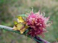 Tau auf den Blüten im Spätsommer (c) Frank Koebsch (2)