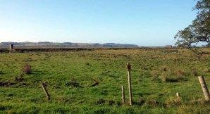 Blick über die Boddenwiesen von Middelhagen auf Gager (c) Frank Koebsch (2)