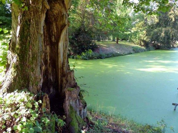 Historische Parkanlage des Schlosses Griebenow (c) FRank Koebsch (6)