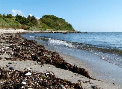 Spühlsaum am Strand von Thiessow (c) Frank Koebsch (1)