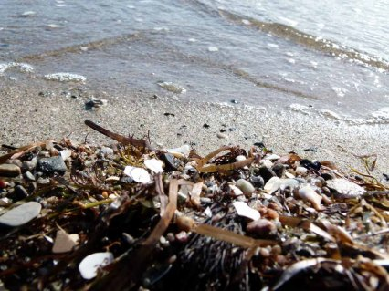 Spühlsaum am Strand von Thiessow (c) Frank Koebsch (2)