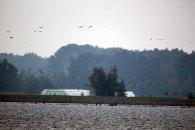 tausende Kraniche und Gänse über Ummanz (c) FRank Koebsch (4)