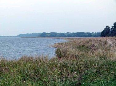 Ufer der Udarser Wiek (c) Frank Koebsch