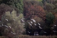 Vogelzug im Herbst auf Hiddensee (c) FRank Koebsch