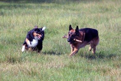 Animal Soul -Tierfotografie - Ebby und Bo (c) Frank Koebsch (1)