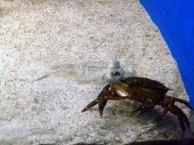 Blick in die Ostseeaquarium des NATUREUMS Darßer Ort (c) Frank Koebsch