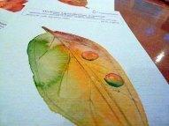 Das passende Papier für Herbstlaub (c) Frank Koebsch