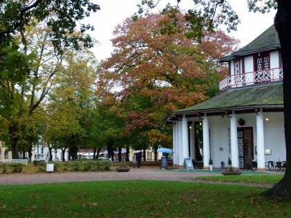 Herbst am Doberaner Kamp (c) FRank Koebsch