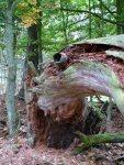 Herbst an der Ostsee (c) FRank Koebsch (2)
