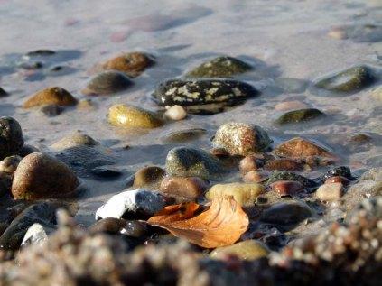 Herbst an der Ostsee (c) FRank Koebsch