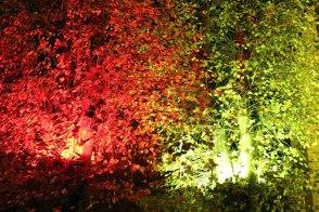 Illuminierter Klosterhof während der Rostocker Lichtwoche (c) Frank Koebsch (1)