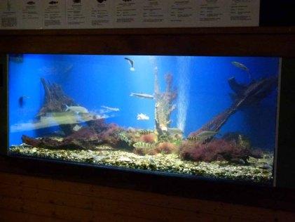 Ostsee Aquarium im NATUREUM Darßer Ost (c) FRank Koebsch