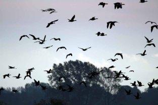 Vogelzug auf Ummanz (c) Frank Koebsch (2)