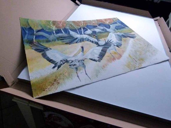 Das Kranich Aquarell - Wenn es Herbst wird - vor der Rahmung (c) Frank Koebsch