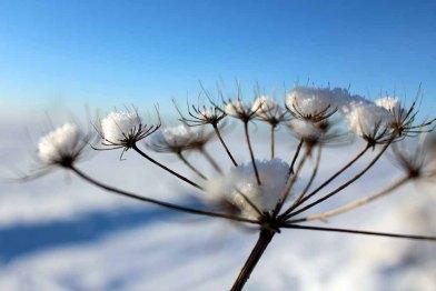 Der Schnee verzaubert die Vegetation aus dem Herbst (c) Frank Koebsch (1)