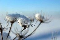 Der Schnee verzaubert die Vegetation aus dem Herbst (c) Frank Koebsch (2)