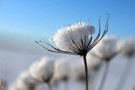 Der Schnee verzaubert die Vegetation aus dem Herbst (c) Frank Koebsch (3)