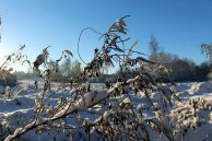 Der Schnee verzaubert die Vegetation aus dem Herbst (c) Frank Koebsch (4)