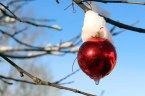 Weihnachtsschmuck an einer Eberesche (c) Frank Koebsch (2)
