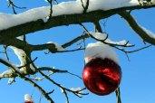 Weihnachtsschmuck an einer Eberesche (c) Frank Koebsch (3)
