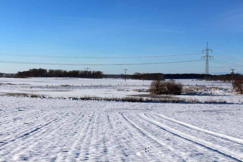 Entdecken Sie den Kranich im Schnee? (c) Frank Koebsch