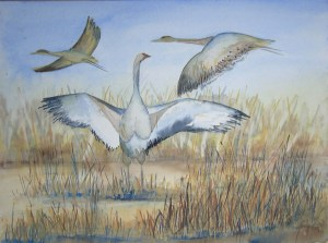 Kraniche im Abflug (c) Aquarell von Frank Koebsch